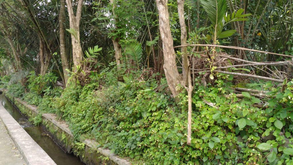 Rumah Joglo siap[ bangun Watugendong (9)